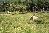 picture of pasture  - Two cow on pasture land vintage style - JPG