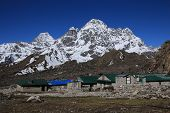 picture of cho-cho  - Lodges in Thagnak and snow capped Phari Lapcha - JPG