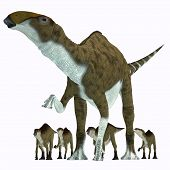 picture of herbivorous  - Brachylophosaurus was a herbivorous hadrosaur dinosaur that lived during the Cretaceous Period of Alberta Canada and Montana North America - JPG