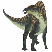 foto of herbivorous  - Ouranosaurus was a herbivorous hadrosaur dinosaur that lived during the Cretaceous Period of Africa - JPG