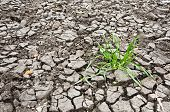 picture of dry grass  - grass in the dry ground will to live concept - JPG