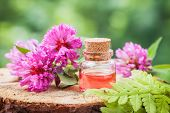 image of red clover  - Bottle of elixir or essential oil and bunch of clover on stump in forest - JPG