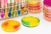 Biochem Tests And Agar Plate In Lab Microbiology. poster