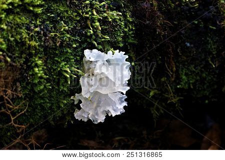 White Fungus Growing On A