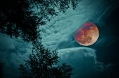 Attractive Red Super Moon Or Blood Moon On Colorful Sky Above Silhouettes Of Trees. Full Moon Behind poster