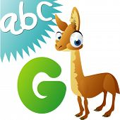 animals alphabet: G is for Guanaco