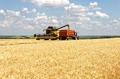 Combine Harvester Load Wheat In The Truck At The Time Of Harvest In A Sunny Summer Day poster