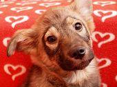 stock photo of seeing eye dog  - Dog - JPG