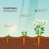 Template For Agriculture Or Botany, Biology Sign About Plant Growth. Vegetarian Or Healthy Food, Veg poster