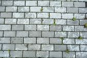 Постер, плакат: Stone Pavement With Grass Texture Top View On Cobblestoned Pavement Background Abstract Background