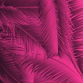 Pink Palm Leaves. Exotic Plants Of Coconut. Trendy Branches Set. Vector Tropical Foliage. Botanical  poster