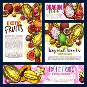 Exotic Fruits Sketch Banners And Posters Of Durian, Papaya Or Mango And Mangosteen. Vector Harvest O poster