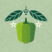 Bell Pepper Illustration. Green Bell Pepper With Leaves And Flowers On Shabby Background. Symmetrica poster