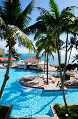 picture of conquistadors  - Palms trees soar above the beautiful pool in El Conquistador Puerto Rico - JPG