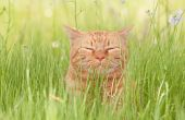 A blissfully happy orange tabby cat enjoying life in tall spring grass in a shade, with his eyes clo