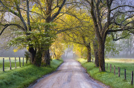 picture of smoky mountain  - Cades Cove Great Smoky Mountains National Park Scenic Landscape Spring photography on Sparks Lane - JPG