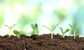stock photo of land development  - Green seedling growing from soil on bright background - JPG