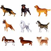 Dogs Isolated On White Vector Set