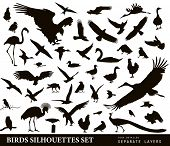 picture of duck-hunting  - Birds vector silhouettes set - JPG
