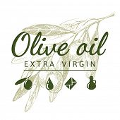pic of olive branch  - Hand drawn olive branch and olive sign - JPG