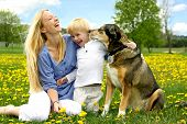 pic of shepherds  - a happy young mother and her little child are sitting outside in a Dandelion Flower meadow laughing as the play with their pet German Shepherd Dog - JPG