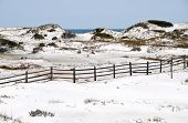 picture of gulf mexico  - Beautiful Sand Dunes in the Gulf of Mexico - JPG