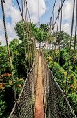 stock photo of canopy  - Canopy Walkway in Kakum National Park - JPG