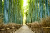 picture of bamboo forest  - Kyoto - JPG