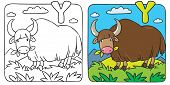 picture of yaks  - Coloring picture or coloring book of funny grazing wild yak - JPG