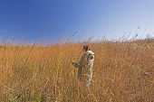 image of tallgrass  - Nature Lover in the Tall Prairie Grass at Ledges state park in Iowa - JPG