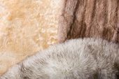 foto of mink  - Blond sheepskin blue fox and red sable mink furs - JPG
