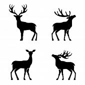 stock photo of antlers  - Vector illustration of collection of deers silhouette - JPG