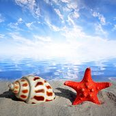 image of conch  - Conch shell with starfish on beach at sunset - JPG