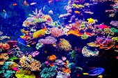 foto of saltwater fish  - Coral Reef and Tropical Fish in Sunlight - JPG