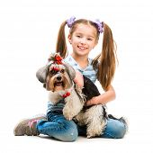 stock photo of yorkshire terrier  - smiling little girl is with her dog Yorkshire Terrier isolated on white - JPG