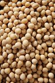 picture of soy bean  - close up texture of soy beans as background - JPG