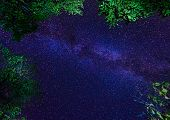 picture of starry night  - The Milky Way galaxy on night starry sky with trees crown - JPG