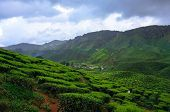 image of cameron highland  - beautiful tea plantations in the mountains of Malaysia - JPG