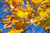 pic of tree leaves  - Autumn leaves  - JPG