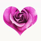 stock photo of red rose flower  - Pink rose in the shape of heart - JPG