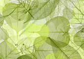 leaf background green color