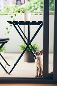 Curious Devon Rex Cat Is Walking On The Green Balcony And Enjoying Fresh Air. Terrace With Plants poster