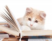 Little cat read a book