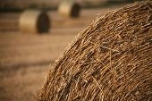 picture of gleaning  - Bundles of straw on a field in late summer - JPG