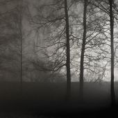 Illuminated Naked Leafless Branches, Backlit Misty Trees Silhouettes, Black Stone Wall, Vertical Bri poster
