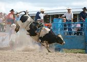 HASTINGS - October 24: Cowboy riding a bull at the Hawkes Bay rodeo. Hastings New Zealand October 24