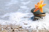 stock photo of sand lilies  -  sea still life with lily and pebbles - JPG
