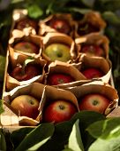 Ripe Apples With Leaves In Basket On Dark Background. Mix Of Ripe Apples From Garden. poster