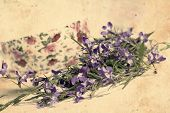 stock photo of lobelia  - Beautiful vintage background with blooming lobelias and teacup - JPG