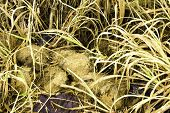 image of crappie  - Of cattle waste for the farm in grass - JPG